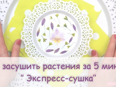 DIY.How to press flowers in a microwave.Сушка растений.  Сухоцветы за 5 минут!